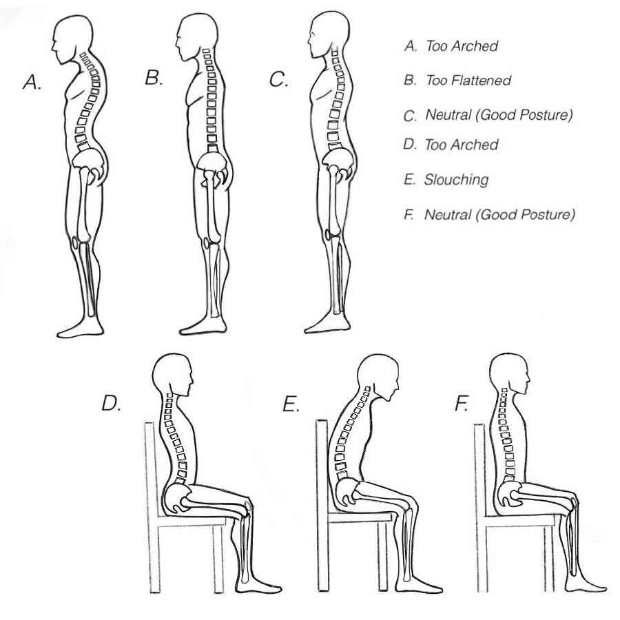 Image shows different spine positions